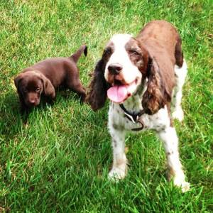 This is me at 6 weeks old with my old friend, Bogey (17 years Old). He was my 1st hero in life.