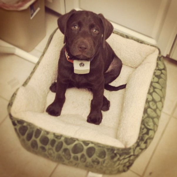Already outgrowing my first bed 12 weeks old!